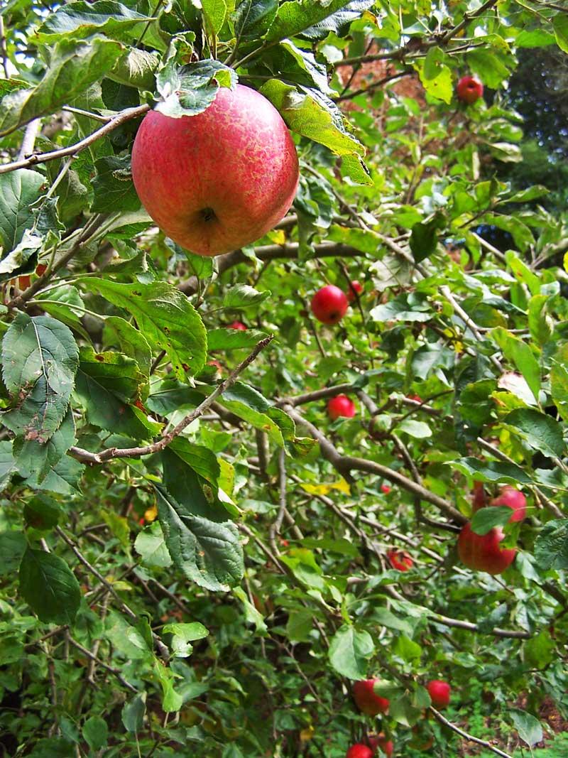 Local Seasonal Food In Restaurants Local Farmers And Local Organic Distributors