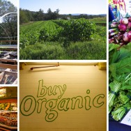 Organic Certification: Farmers Weigh The Costs
