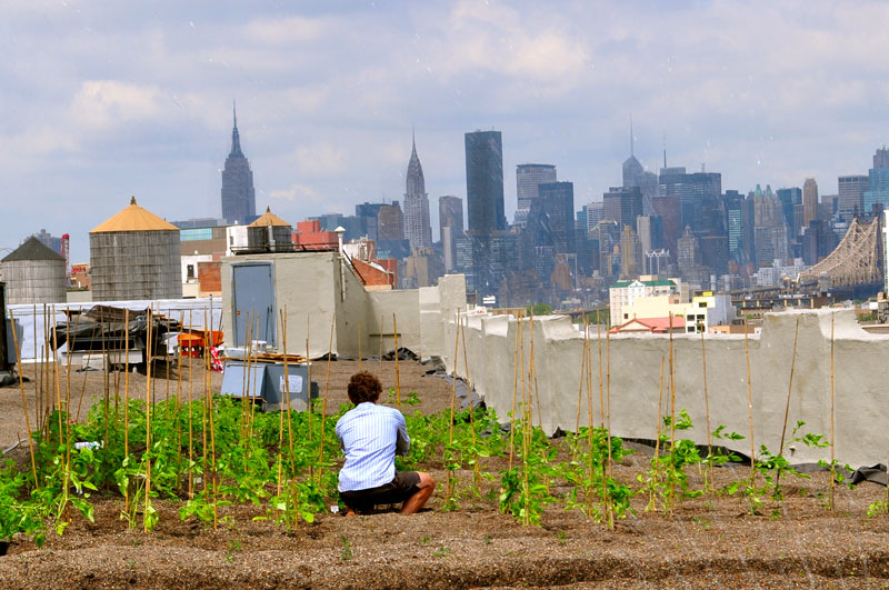 Rooftop Urban Farms