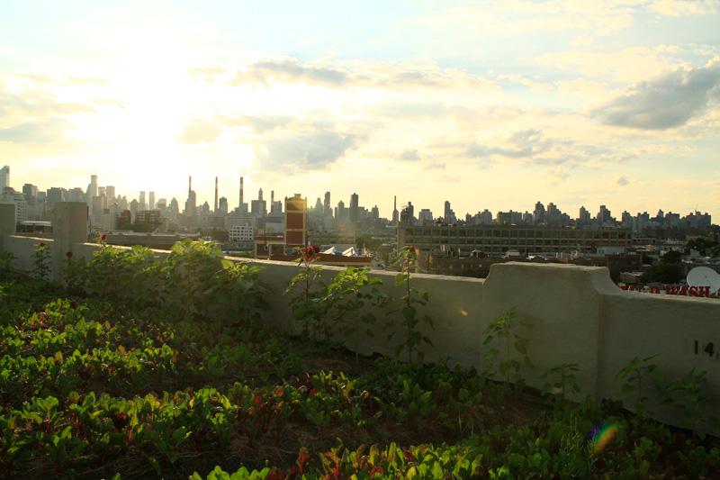 Urban Farming Rooftop Farms