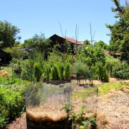 Converting Lawns To Productive Urban Home Gardens