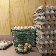 humane certified eggs at Coastal Hill Farm