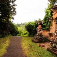 Organic in Bali