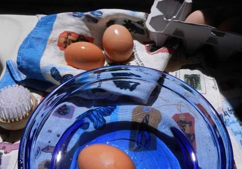 Quick Facts About Egg Cleaning