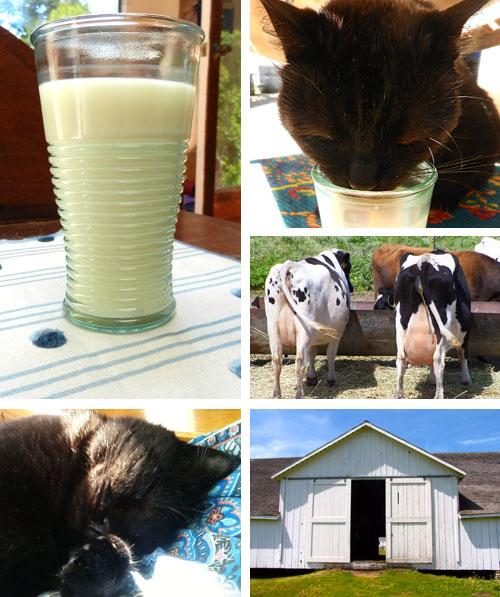 Milk Season