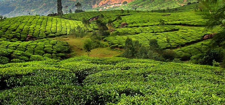 Organic Kerala
