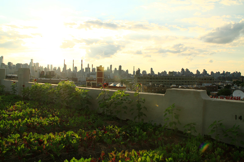 Urban Farming Rooftop Farms