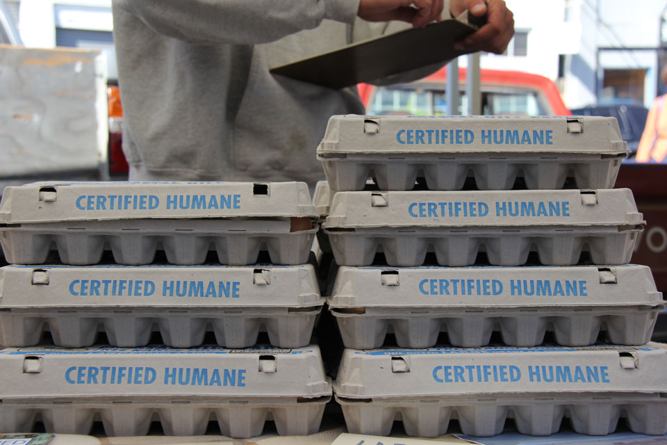 Coastal Hill Farm certified humane eggs
