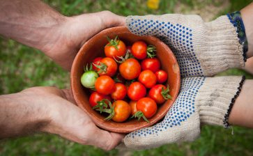 How to Buy Fresh, Organic, Sustainably Grown Local Produce