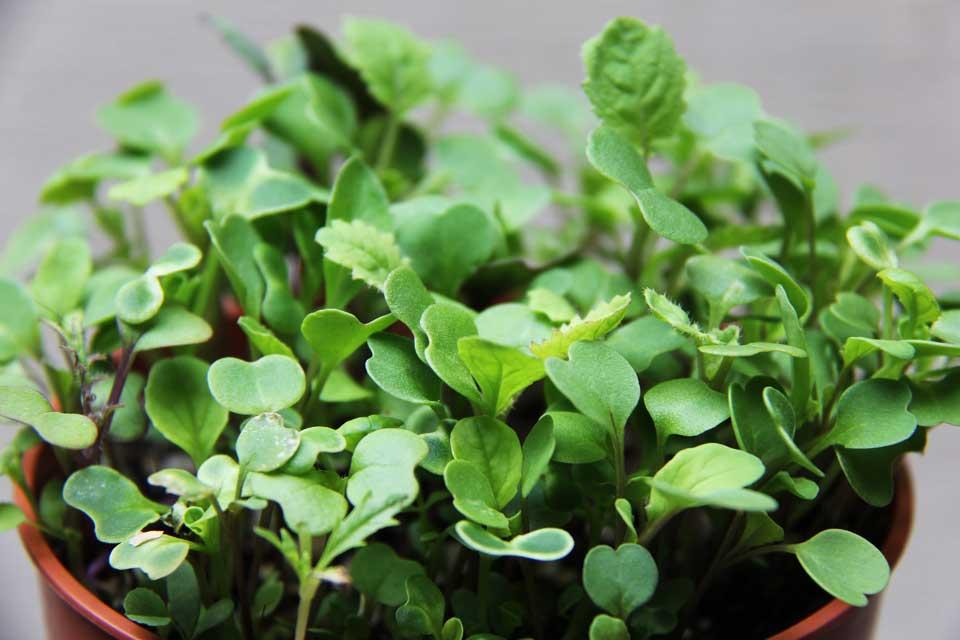 Tips for saving money on organic food