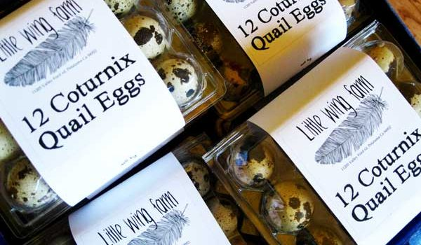 Small Local Farms Producing Humanely Raised Quail Eggs