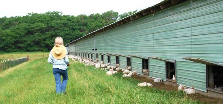 Smart Chicken: Nebraska Poultry Farm Goes Beyond Organic