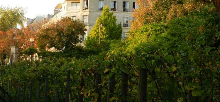 Urban Agriculture: Vineyards in the Heart of Paris