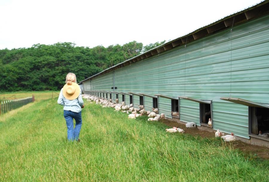 Smart Chicken Tecumseh Farms